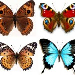Идеи и трафареты бабочек