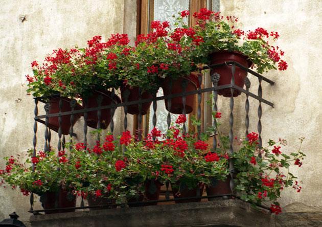 Красивый балкон цветы 23