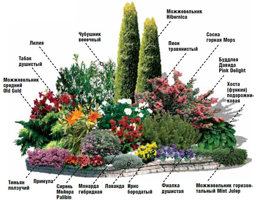 Высадка цветника схема