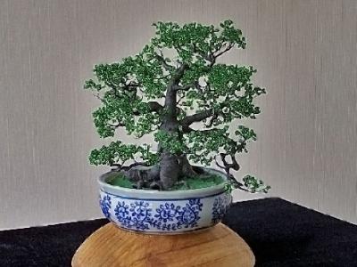 Дерево-бонсай