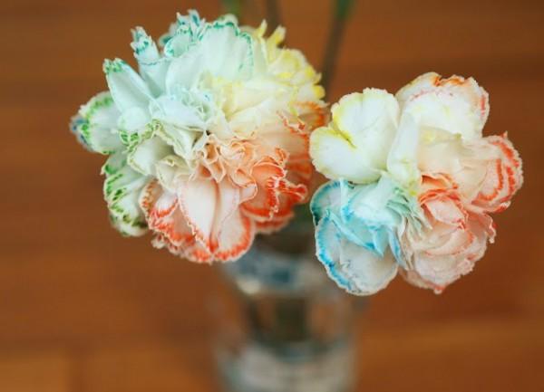 Гвоздики с цветными каемочками