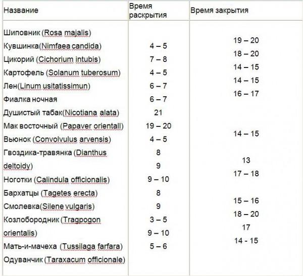 Таблица времени раскрытия и закрытия цветов