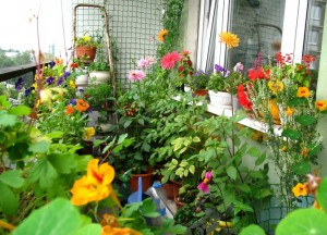 Украшаем балкон цветами