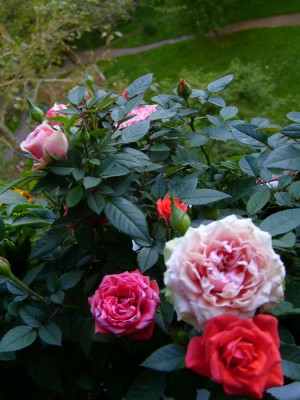 Украшаем балкон розами