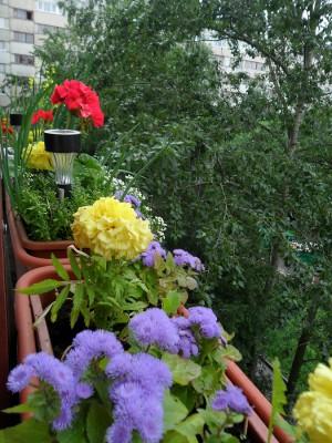 Цветы снаружи балкона