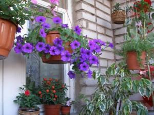 Комнатные растения на балконе