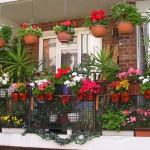 Оформляем балкон цветами