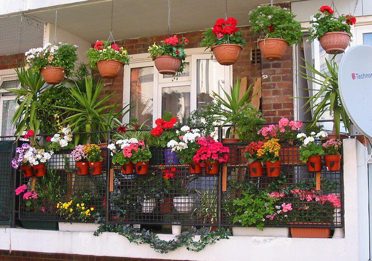 Как украсить балкон квартиры цветами
