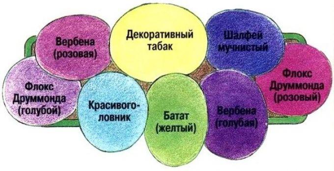 Выбор наполнения цветника