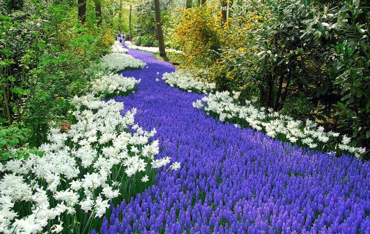 Разнообразие цветника