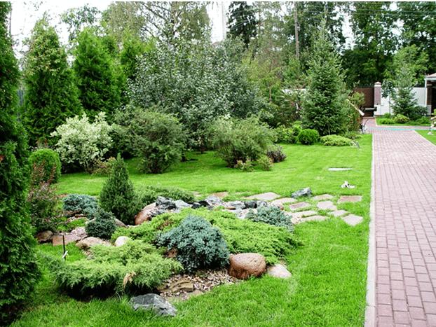Сосны во дворе дизайн