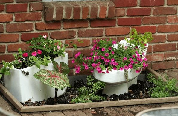 Цветы в унитазе на даче